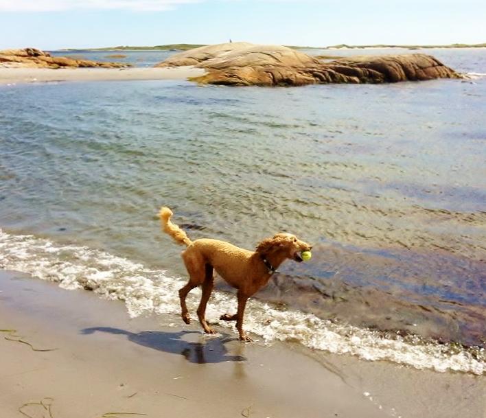 Playing fetch!
