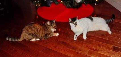 Meowy Christmas :)