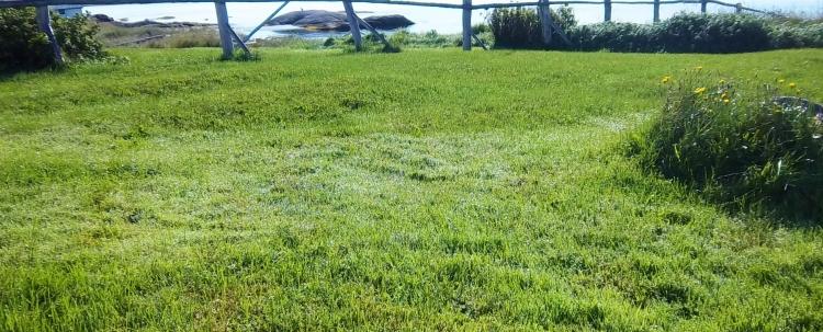 The grass is still glistening with dew.