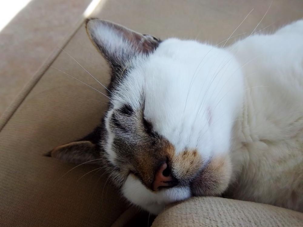 Cat Dreams (3/6)