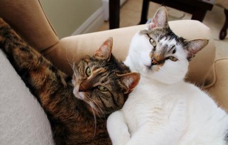 Maisie & Vivian