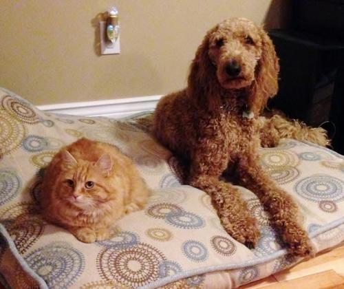 Ginger & Nico