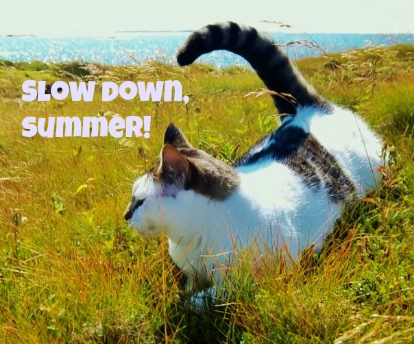 slowdownsummer