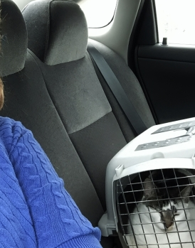 Jennifer stayed in the back seat with me, so I stopped crying. An hour and a half is a long drive for a kitty.